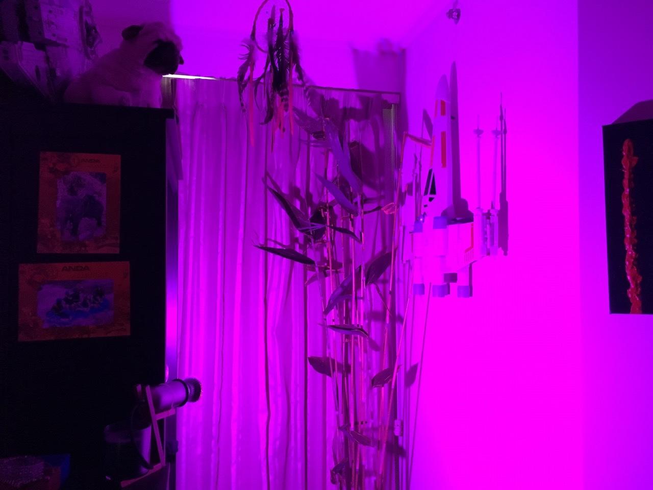 DIY indoor apartment grow light wiring   Igor Kromin